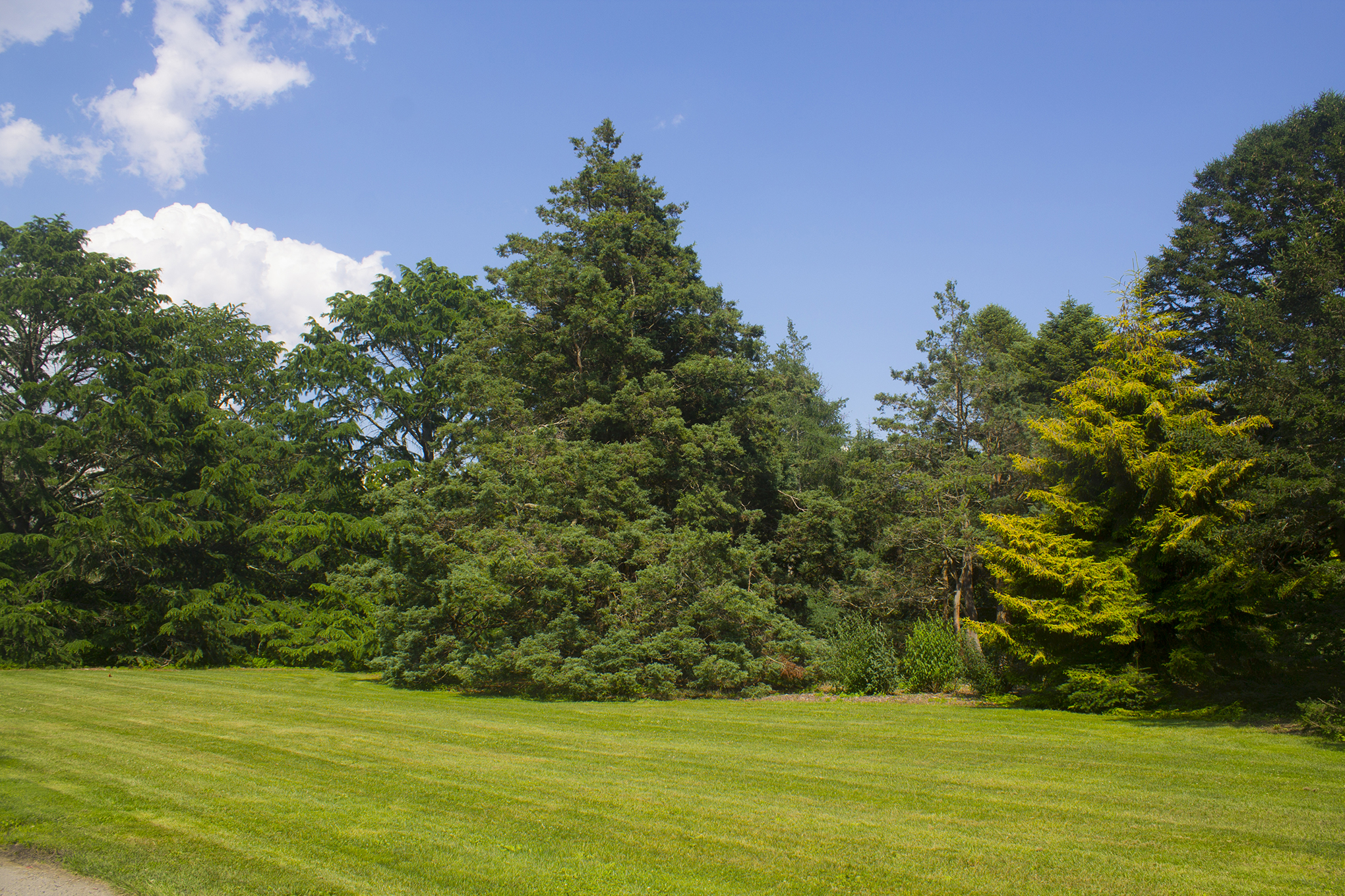 Photograph of New Pinetum by Courtney Pure
