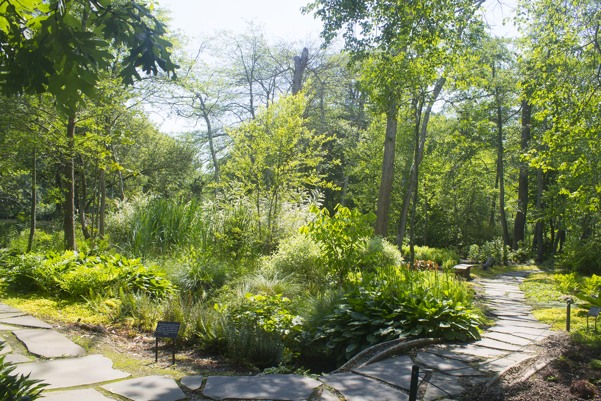 Evolution of the American Landscape Symposium - Photo of Woodland Garden